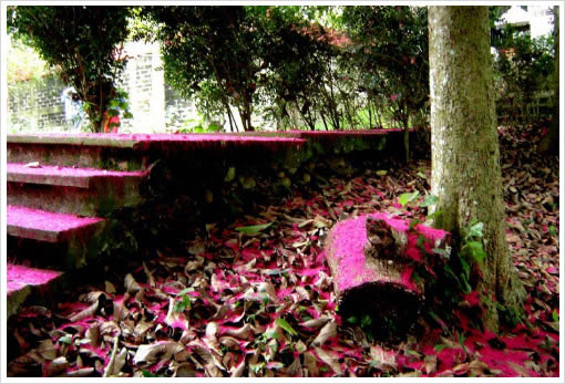Baja Del Río Hospedaje y Alojamiento En Villas Ecoturísticas De Misantla Veracruz